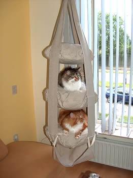 Кошачья трапеция
