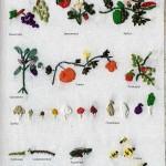 Образцы вышивки лентами: как вышивать разные цветы
